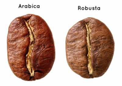 Arabica and robusta coffee beans compared