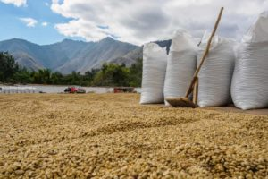 Best Organic and Ethical Coffees